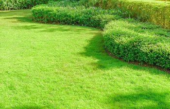 A manicured lawn