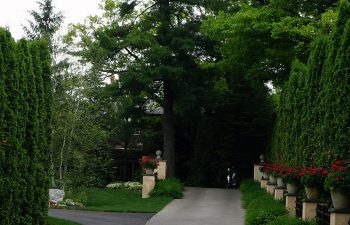 path in the garden surrounded by trees and flowerpots