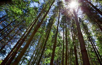 Trees Alpharetta GA